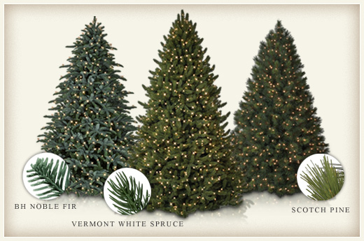 Evergreen Everlasting The Differences Between Fir Spruce