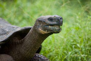 Galapagos Islands Photo Essay