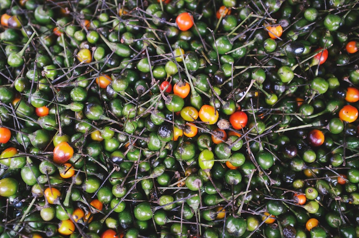 Chiltepin: The Mother of Peppers