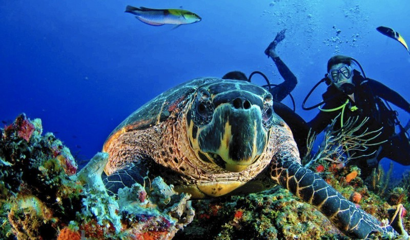 A turtle and a scuba diver photographed together.