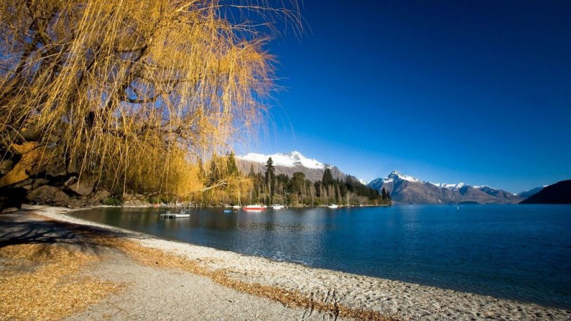 Travel New Zealand on a Budget