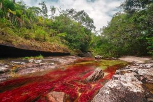 Discover Caño Cristales, One of the World's Most Beautiful Rivers