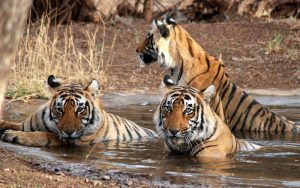 Discover Ranthambore National Park, India