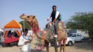 Experiencing a Camel Safari in Rajasthan