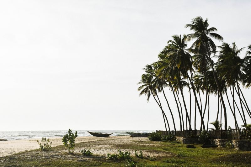 A beach with palm trees and landed boats in Arugam Bay, Sri Lanka