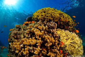 The Top 10 Most Beautiful Coral Reefs In The World