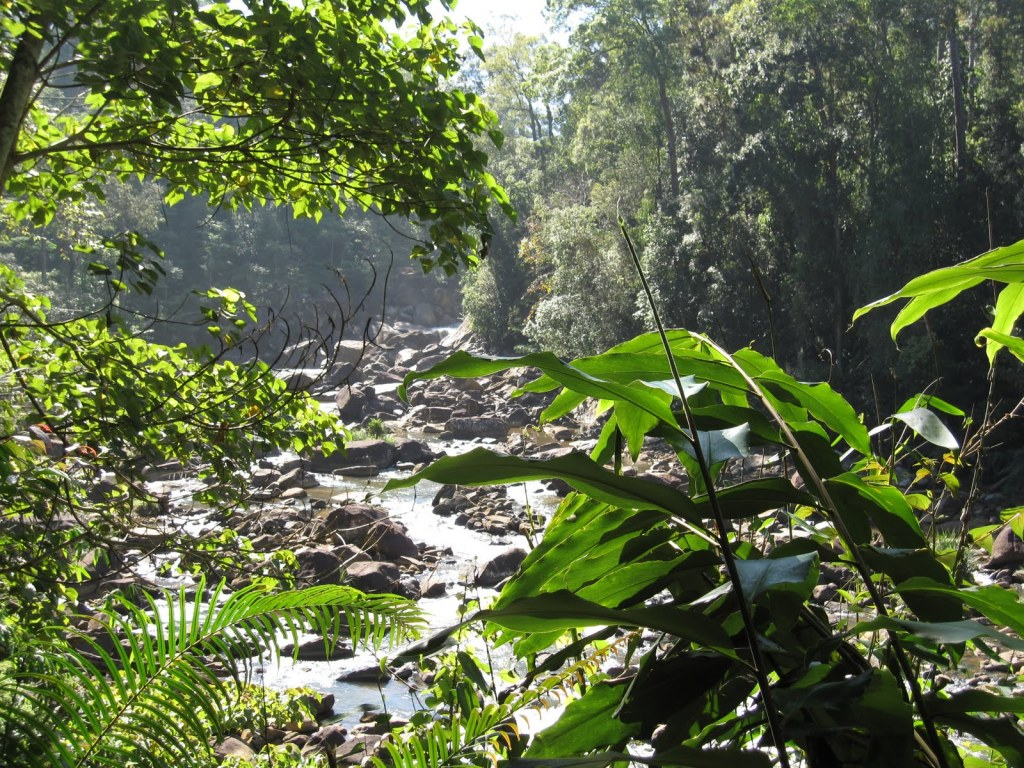 UNESCO-listed Sinharaja Forest Reserve in Sri Lanka