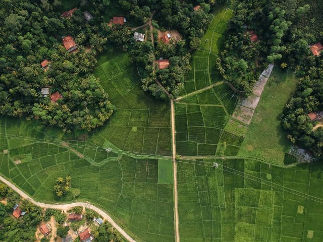 Arial view of a tea plantation, something to do in Sri Lanka