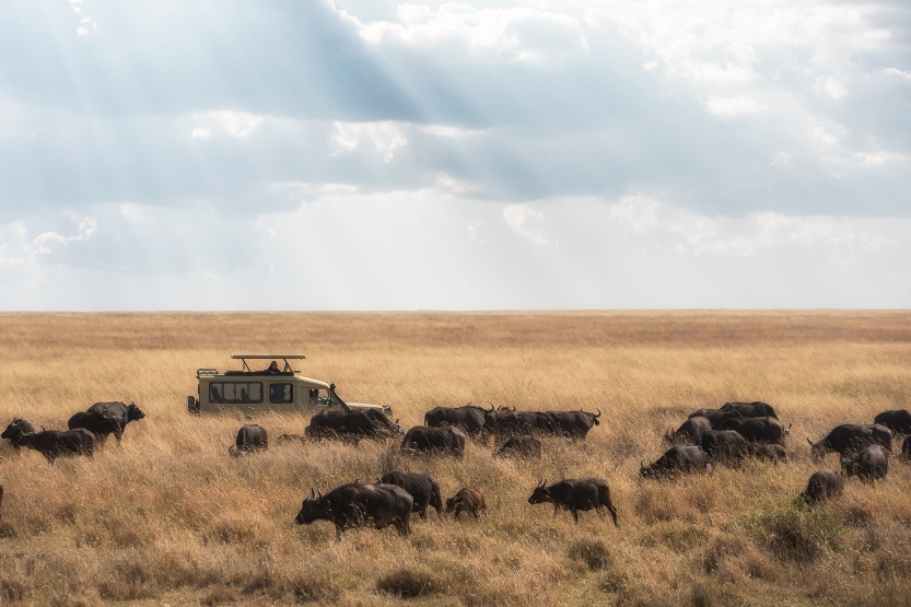 Top tips for planning your next safari