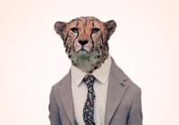 Which Financial Wild Animal Are You? Find Out Now!