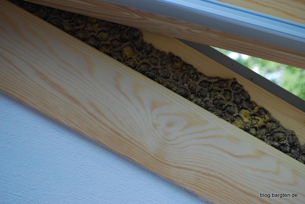 Berühmt Zwischenmieter: Bienen im Veluxfenster | Bargten19 RG66
