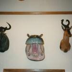 Hippopotamus, Blue Wildebeest & Hartebeest