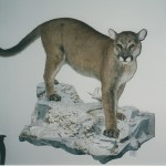 Mountain Lion 7