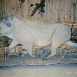 Wart Hog (Life Size) 2