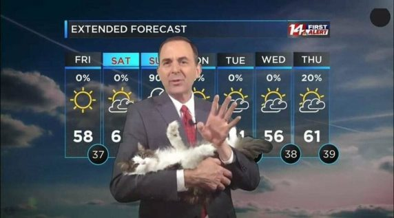 2. Betty the weather cat