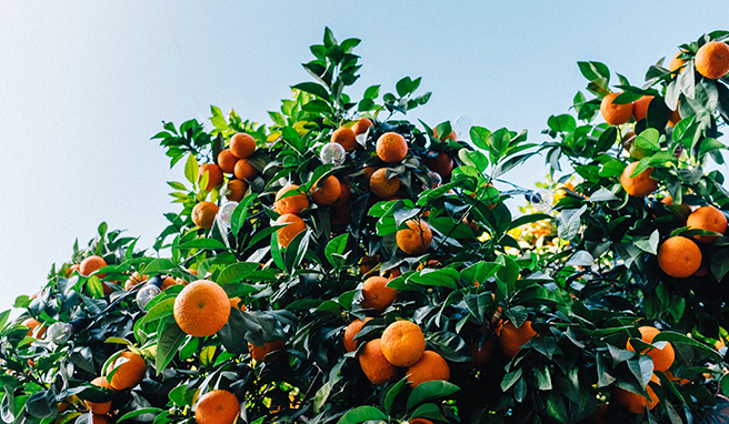 Why You'll Want To Add Vitamin C To Your Skin Care Routine