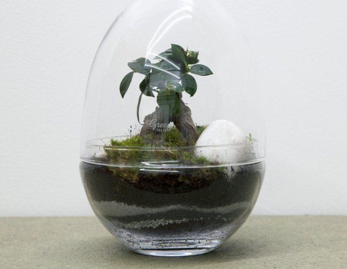Mini Jardin O Acheter Un Terrarium Et Comment Le Faire