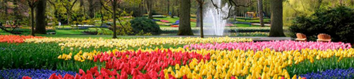 Holambra A Cidade Das Flores Nossa Voz Bemglô