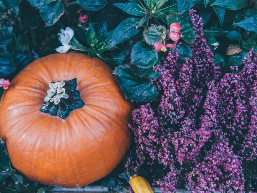 4 DIY Fall Decorations for your Garden