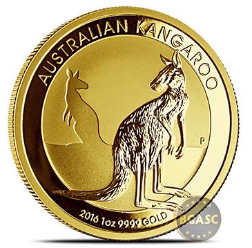 australian gold kangaroo image
