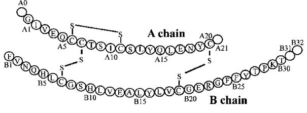 Структура на човешкият инсулин.