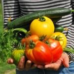 Come è bello fare l'orto: l'Orto-terapia o Horticultural Therapy