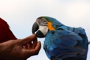 pappagallo pet therapy