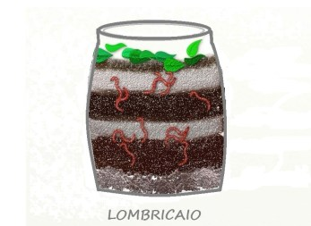 lombricaio imm