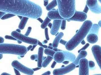 probiotici