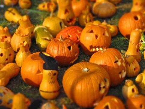 zucca halloween piccole