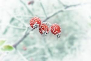 orto dicembre