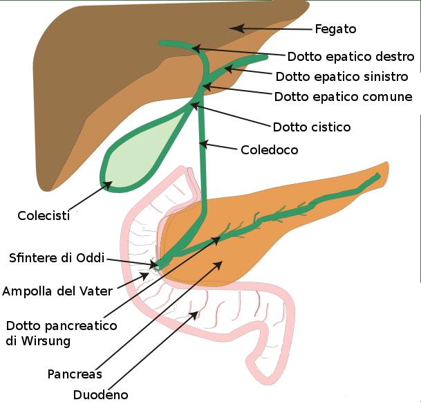 dieta per la pulizia del fegato e del pancreas infiammato