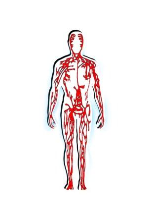 circolazione vene