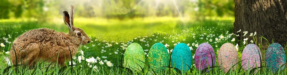 pasqua lepre 7 uova