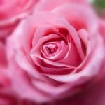 Di che fiore sei? Come il tuo fiore preferito racconta di te
