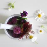 Farmacista naturopatico, il percorso online per i nostri soci