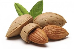 Almonds support lung strength when feeding horses in autumn.