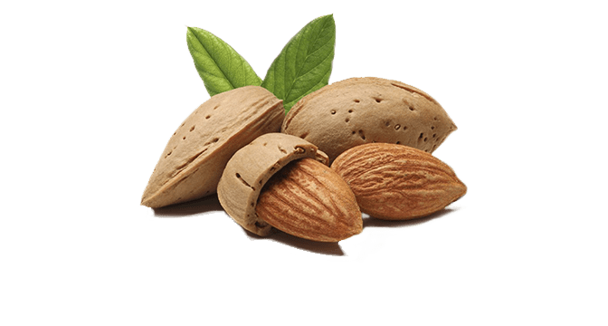 Almonds for Horses