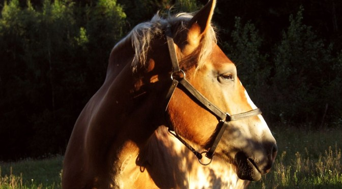No Sweat: Anhidrosis in Horses