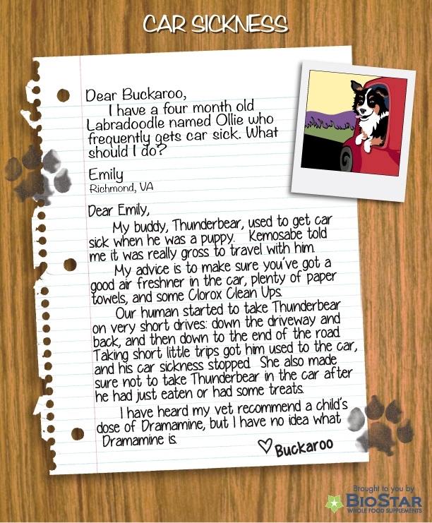 Buckaroo Tackles Dog Car Sickness