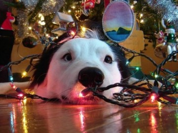 dog tangled in Christmas tree - Canine Tips for Happy Holidays