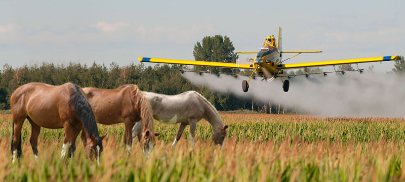 glyphosate sensitivity in horses