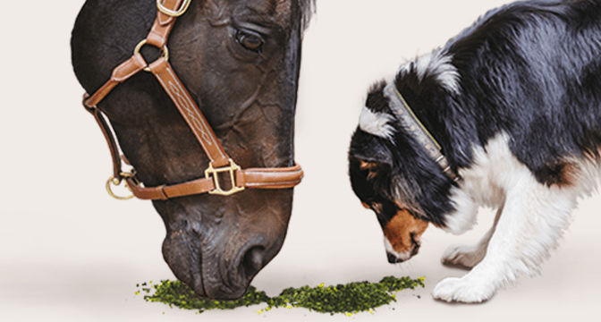 Does My Horse Need a Multivitamin / Mineral Supplement