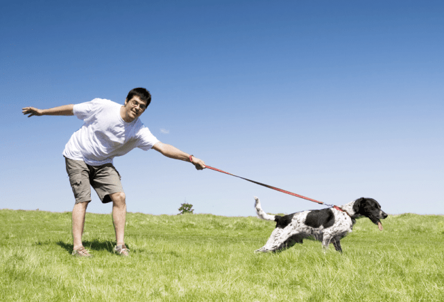Pulling on the leash - training your human | BioStar US