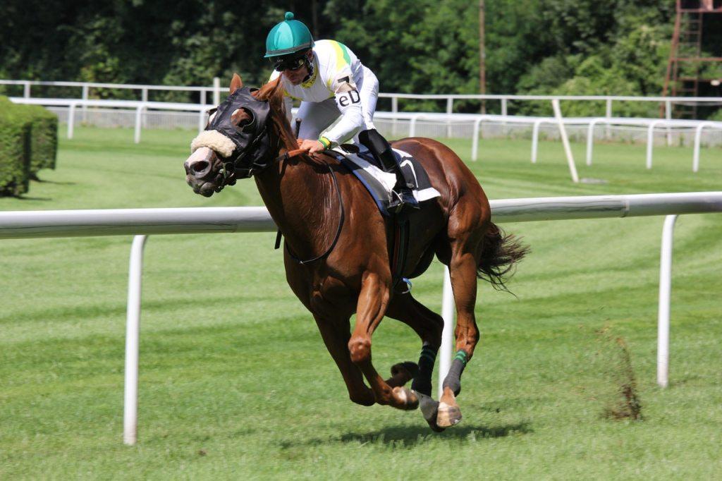 race horse | BioStar US
