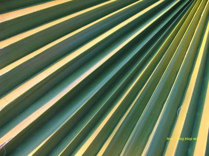 Palmine skaline