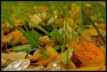 Rosne vlati trave (detalj)