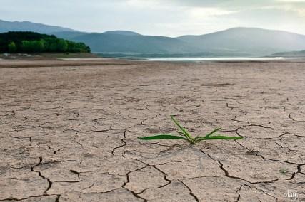 Biljka na obali isušena Peručkog jezera, Hrvatska