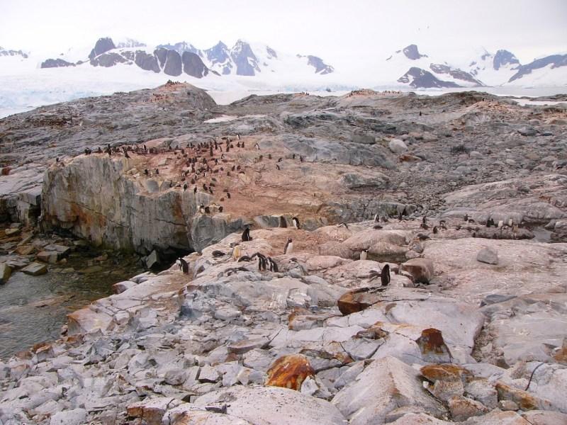 Photographer: Steve Forrest Credit: NOAA NMFS SWFSC Antarctic Marine Living Resources (AMLR) Program