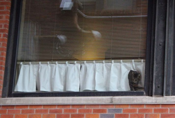cat curtain
